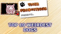 Top 10 weirdest dogs on Earth that will make you laugh hard - Funny dog compilation !