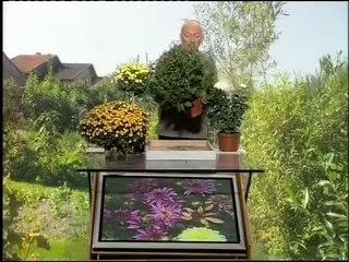 Visionnez les Cours Vidéo de Chrysantheme - Conseils de Jardinage