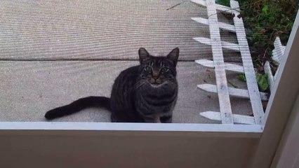 Un chat errant vient réclamer de la nourriture, mais ÉCOUTEZ le son qu'il fait... Ça alors, je n'ai jamais rien entendu de tel?!