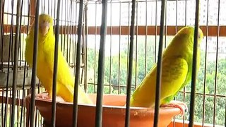 Birds of Bangladesh Ekushey Television Ltd 05 11 2015