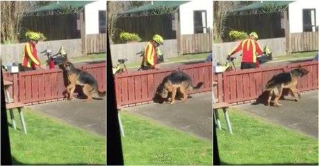 Dono filma escondido da janela o que o carteiro faz todos os dias ao seu cão