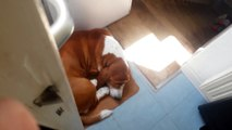 Quand ton chien te bloque aux toilettes... FAIL