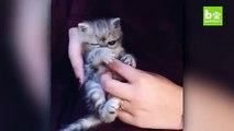 Ce chat tout bizarre aux yeux ronds fait le buzz sur Internet