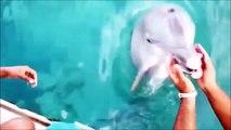 Quand ton pote le dauphin va chercher ton iPhone au fond de la mer! Sympa