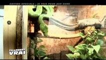 Un homme élève une trentaine de serpents à son domicile ! Regardez