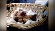 Des chiots mignons... Plein de chiots. Compilation adorable