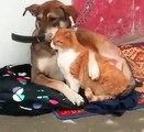 Il Cane é legato alla Catena ma per fortuna c'è il suo amico Gatto a stargli vicino!