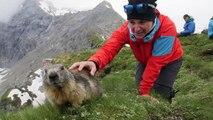 Des randonneurs se lient d'amitié avec des marmottes dans les Alpes Suisses