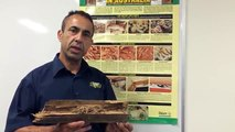 Termites Inspection – How do I know if there is a termite in my home