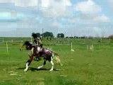 pony-games 2 tasses