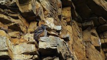 Hibou grand-duc dans le Jura : les plus belles images du photographe animalier Guillaume François
