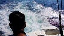 Ce lion de mer poursuit ce bateau de peche pour piquer un poisson