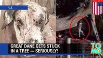 Dog stuck in a tree: Great Dane rescued from tree by Nebraska firefighters - TomoNews