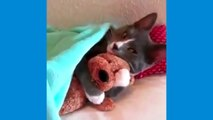 Video drole de chute d'animaux-video drole chat