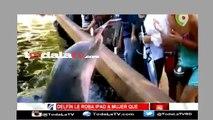 Delfín roba ipad a espectadora que le estaba tirando fotos-Noticias y Mucho Mas