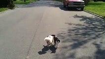 Un chien aveugle guidé par un chat. Un élan de solidarité qui marquera à jamais votre vie !
