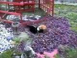 kedi kavgası ! çılgın kediler ! çılgın kedi dövüşü