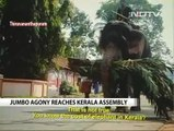 NDTV_ Elephants are abused in the name of temple festivals in Kerala, India 30Jun16