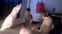 Papagaio imita miar de gatos e junta-se a grupo de felinos como se fosse um deles
