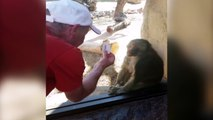 Baboon Is Amazed By Man s Magic Trick