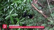 Haute-Garonne : Le moustique tigre sous haute surveillance