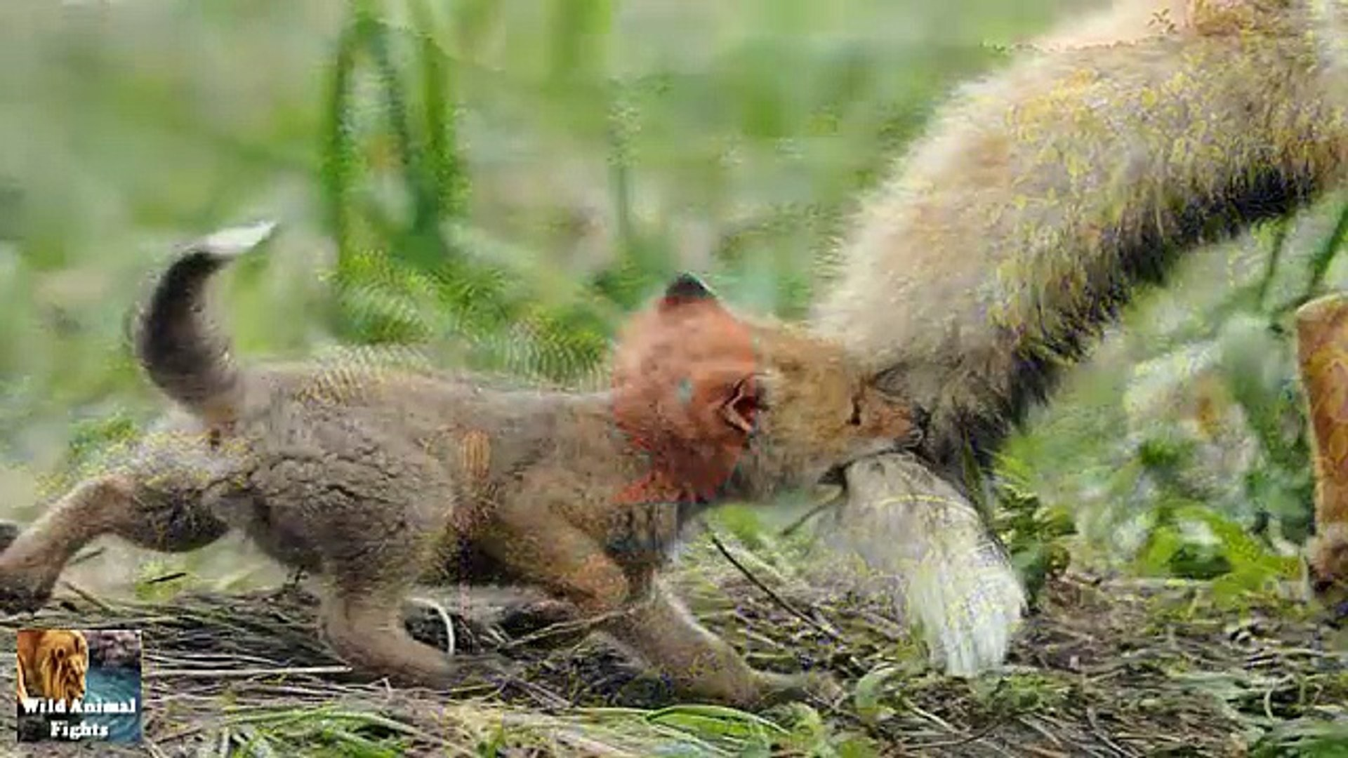 Best 10 Animals Baby   Cutest Baby Animals !