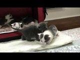 Litter of 3-Week-Old Kittens Start Exploring