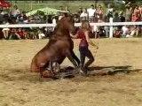 """Spectacle Equestre """"Utopia Eleuteria"""" 1ére-Aout 2006"""