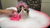 Un adorable chat prend un bain moussant