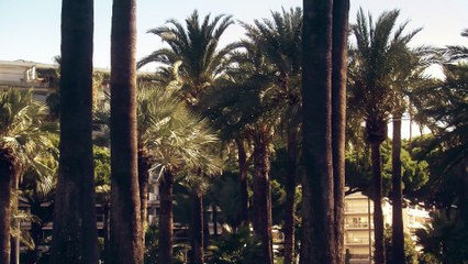 #CoteDazurNow-Carte-Postale-Cannes-Croisette-Lerins-Croisette-Palm-Beach-Square- Verdun