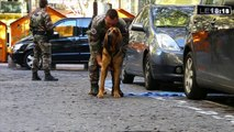 Jaffar, le chien star du monde du secourisme