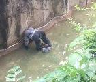 Un enfant chute dans l'enclos d'un gorille au zoo de Cincinnati (États-Unis)