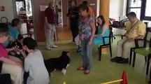 Les chiens au service des personnes âgées et handicapées