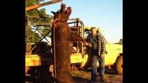 Giant Wild Boar Hunt _ Top 10 Biggest Wild Boar Hunt