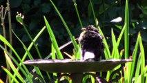 Oiseaux de nos jardins-2ème partie