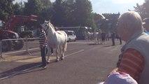 Le concours des animaux débute par les chevaux