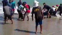 Beached whale shark rescue