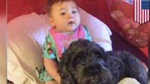 Anjing mati karena melindungi bayi dari kebakaran - Tomonews