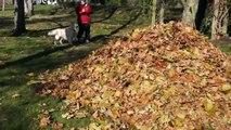 Ce chien adore les feuilles mortes.... ahaha