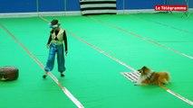 Ergué-Gabéric (29). Dog dancing : des chorégraphies qui ont du chien
