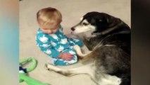 Ce bébé veut jouer avec son chien, mais le sommeil lui tient tête !