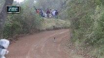 Un pilote de rallye évite de justesse un chien
