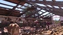 Erdbeben trifft Italiens Bauern hart