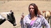 Ce cheval très affectif interrompt une interview LOL