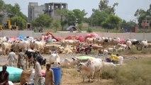 Pakistan'da Kurban Bayramı Hazırlıkları