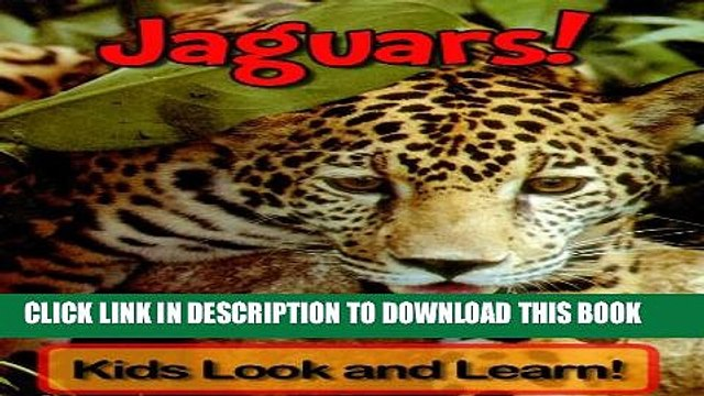 [New] Jaguars! Learn About Jaguars and Enjoy Colorful Pictures - Look and Learn! (50+ Photos of