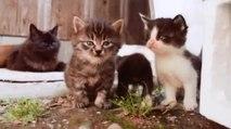 Остров Кошек / The Island Cats (2016)