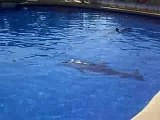 colo pégomas juillet 2007 marineland dauphins dolphins