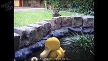 Les chats aussi chassent les pokémons !
