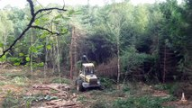 Travaux forestiers en forêt